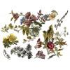 Floral Anthology